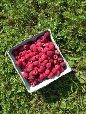 Punnet in the field
