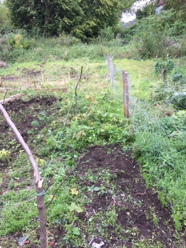 Allotment beds2