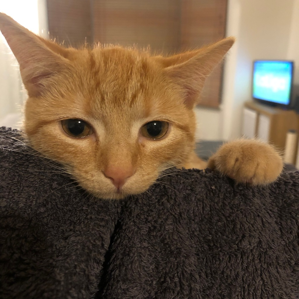 A ginger cat with her head resting on a towel.